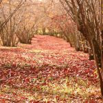 Autumn is colours. by OrchidFeehan