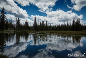 The Reflection in the Pond by mjohanson