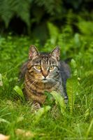 do not forget the Cat Day by hoschie