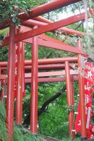 Torii by 10000Greetings
