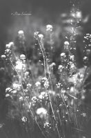Meadow (Detail II). by Phototubby