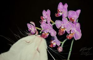 Cat and Flower (phalaenopsis) by riksons
