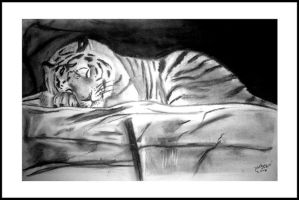 Tiger sleeping by Amandia