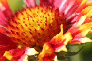 Punchy flower by fl8us-stock