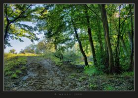 In The Woods III by HogRider