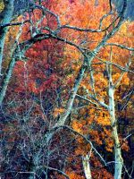Shades of Autumn 7 by MadGardens