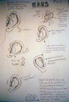 Ears tutorial by Chief-Artist-21