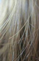My hair... by tomantic