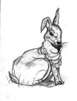 rabbit by nelson1990