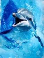 Dolphin smile by elicenia