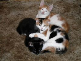 All Huddled Together by Miss-Whoa-Back-Off