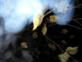smoke and leafs. by Drainth3bl00d
