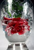 Rose swirls up water by Clueso