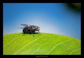 the fly in the moring by edgarliborio