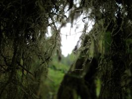 Through Moss Covered Eyes. by swampliquor