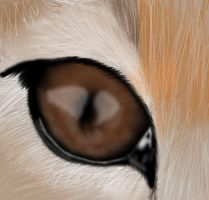 Cheetah Eye by selftaughtartist1