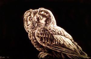 Owl black and white (Chouette de Tengmalm) by Bisanti