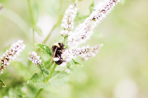 bee.2 by maryieh