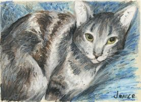 Cat in oil pastel by wolfie-janice