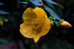 Yellow Flower by CNStock