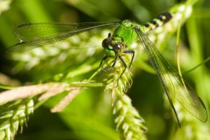 Dragonfly 3681 by M-Lewis