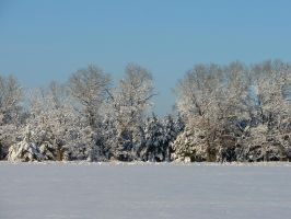 Snowy Landscape Background 04 by FantasyStock