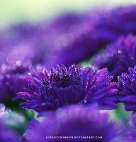 Purple Flowers with Dew Drops by KissofCrimson
