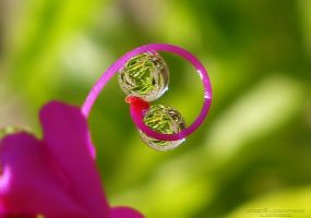 two drop by lindahabiba