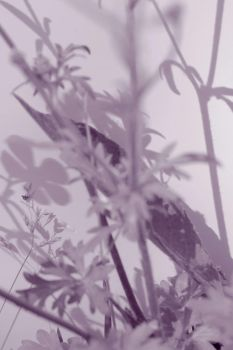 Abstract-ish weeds by SprenklePhotography