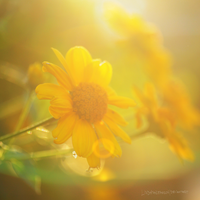 sunny evenings by LindaMarieAnson