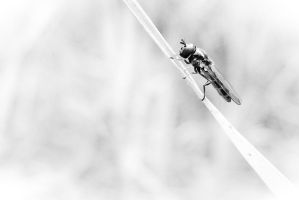 A Strange Fly On A Blade 2 by Youcef07