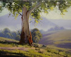 Bathurst Gum by artsaus
