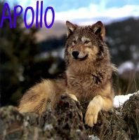 Apollo by SillyPickles