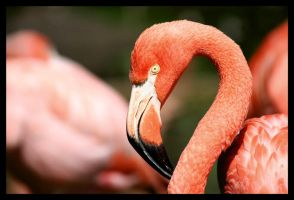 Flamingo diptych by darthpayback
