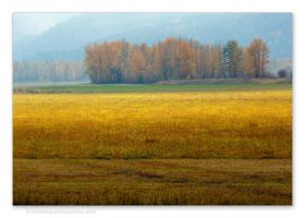 Field-1 by kootenayphotos