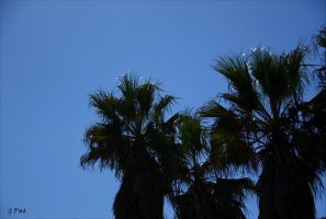 The top of the palm by Patguli