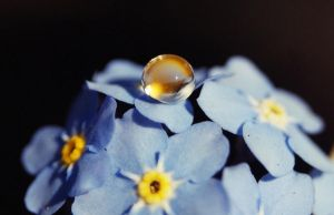 spring drop II by maltissimo