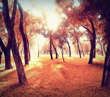 Sunlight_on_the_ground by Goliath-Artistry