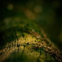 In the Forest : Bokeh is Magic by Madhorse5