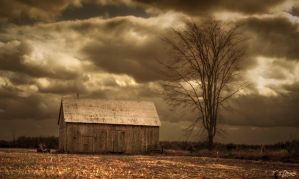 Old Barn and Bare Tree by Nini1965
