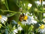 Bee by dmguthery