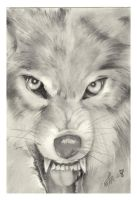 angry wolf by visshet
