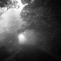 Misty Hollow by Hengki24