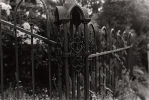 Fence by honnelore