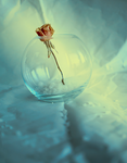 a rose by Amalus
