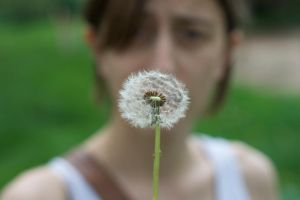 Dandelion5 by aaronius