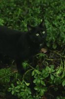 Black Cat in Green by kbhollo