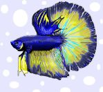 Betta fish by zoops