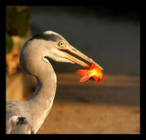 Wild Heron and His Bloody Fish by sekhmet-neseret