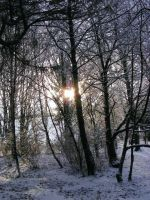 winter morning by Jack-In-The-Green